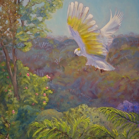 (CreativeWork) Sulphur crested cockatoo - Fly past at breakfast by fiona smith. Oil Paint. Shop online at Bluethumb.