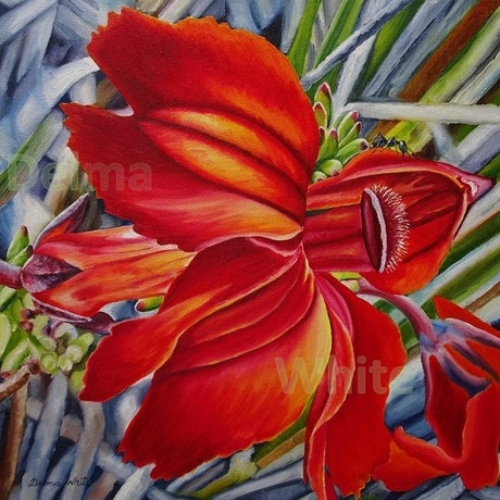(CreativeWork) Red Lechenaultia by Delma White. Oil Paint. Shop online at Bluethumb.