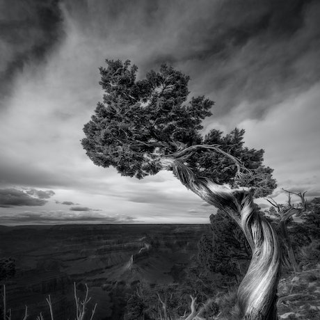 (CreativeWork) South Rim Grand Canyon Ed. 11 of 100 by Nick Psomiadis. Photograph. Shop online at Bluethumb.
