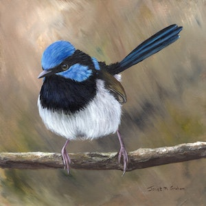 (CreativeWork) Superb Fairy Wren by Janet Graham. #<Filter:0x000055a8bc43c910>. Shop online at Bluethumb.