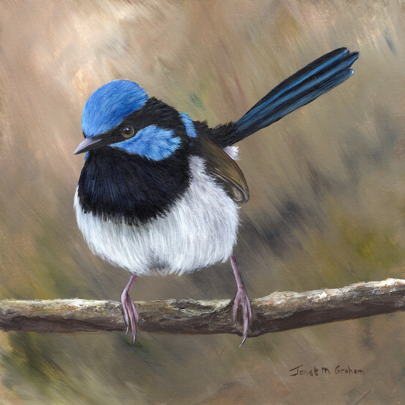 (CreativeWork) Superb Fairy Wren by Janet Graham. Acrylic Paint. Shop online at Bluethumb.
