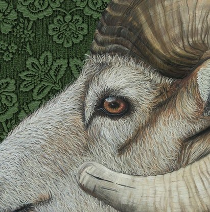 (CreativeWork) The Ram with wallpaper background - Framed Ed. 5 of 100 by Johanna Larkin. Print. Shop online at Bluethumb.