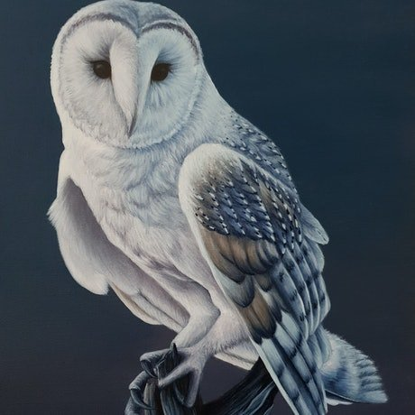 (CreativeWork) Heart Faced Owl by Erin Hale. Acrylic Paint. Shop online at Bluethumb.