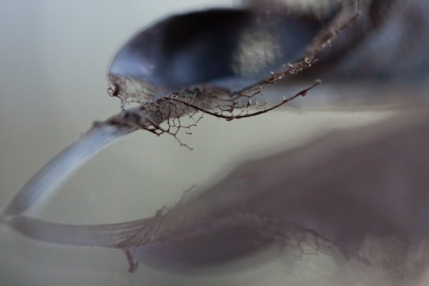 (CreativeWork) Beauty in Decay 1 Ed. 3 of 25 by Alison Shirley. Photograph. Shop online at Bluethumb.
