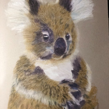 (CreativeWork) Young Koala  by Jennifer Taylor. Other Media. Shop online at Bluethumb.