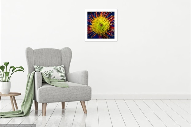 (CreativeWork) Flower Series 2 Ed. 1 of 20 by Adam Tucker. Photograph. Shop online at Bluethumb.