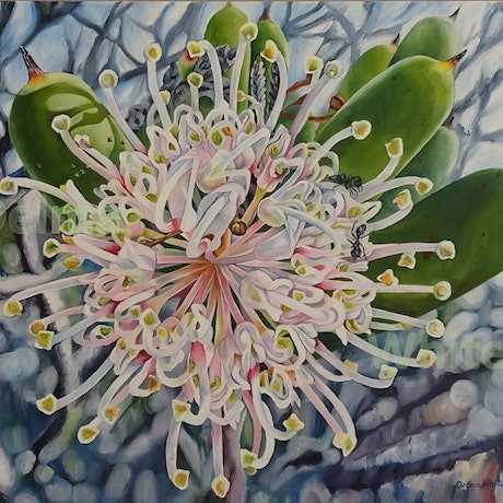 (CreativeWork) Coastal Hakea clavata by Delma White. Oil Paint. Shop online at Bluethumb.
