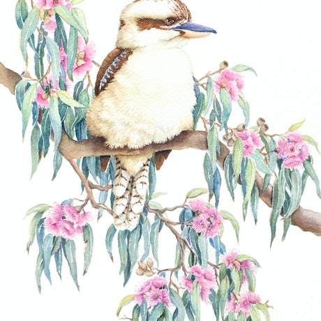 (CreativeWork) Kookaburra and Blossoms by Katherine Castle. Watercolour Paint. Shop online at Bluethumb.