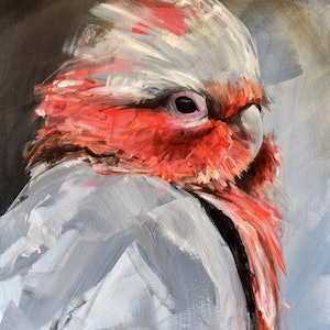 (CreativeWork) Friday Galah by Rebecca Hill. #<Filter:0x00007f1f96fc1db0>. Shop online at Bluethumb.