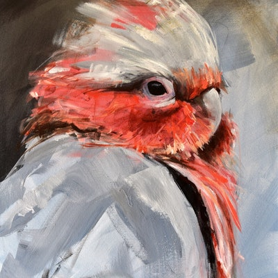 (CreativeWork) Friday Galah by Rebecca Hill. Acrylic Paint. Shop online at Bluethumb.
