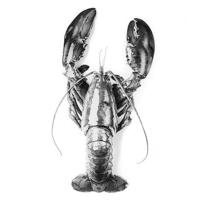 (CreativeWork) Lobster Romance,  Fineliner Ink Pen drawing by Jeesoo kim. Drawings. Shop online at Bluethumb.