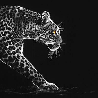 (CreativeWork) On the Prowl by Monika Barbian. #<Filter:0x00007fa58427ef58>. Shop online at Bluethumb.