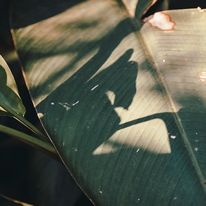(CreativeWork) Plantas experiment II  Ed. 1 of 30 by Agus Gago. Photograph. Shop online at Bluethumb.