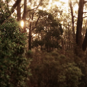 (CreativeWork) Sun Coming Through The Trees Ed. 1 of 3 by Allan Maxwell. Photograph. Shop online at Bluethumb.