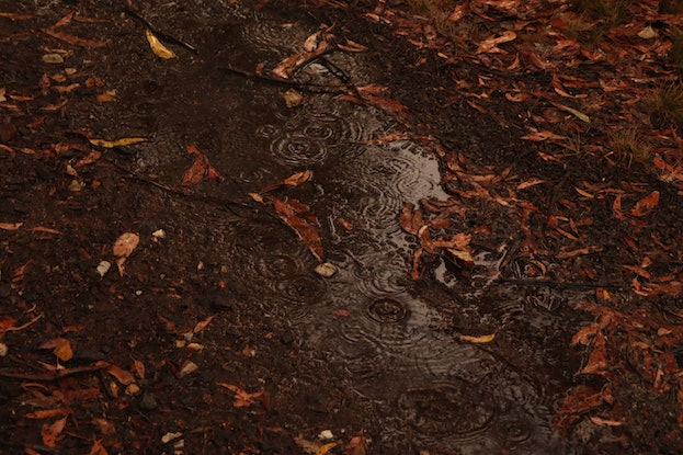 (CreativeWork) Puddle In Rain Photograph Ed. 1 of 3 by Allan Maxwell. Photograph. Shop online at Bluethumb.