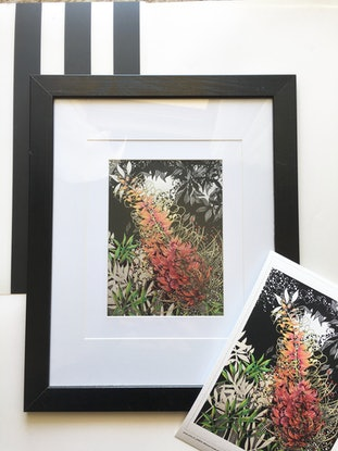 (CreativeWork) Grevillea Flower -  Limited Edition Giclee Print-  4/250 Signed and Numbered. Ed. 4 of 250 by Tania Daymond. Print. Shop online at Bluethumb.