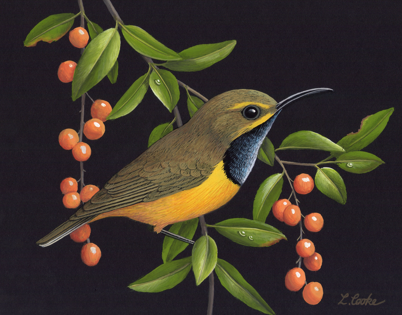 (CreativeWork) Sunbird by Lyn Cooke. Watercolour Paint. Shop online at Bluethumb.