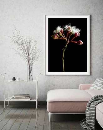 (CreativeWork) Flowering Gum Ed. 1 of 100 by Nadia Culph. Photograph. Shop online at Bluethumb.