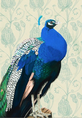 (CreativeWork) Peacock Portrait  Ed. 20 of 100 by Johanna Larkin. Print. Shop online at Bluethumb.
