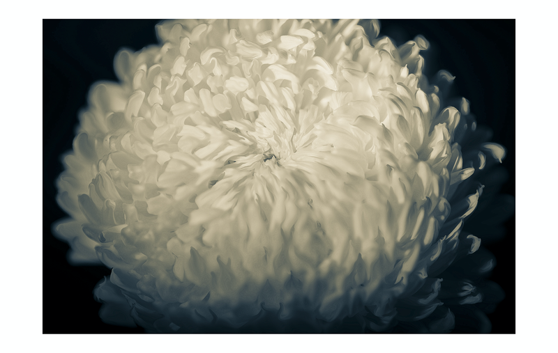 (CreativeWork) Fire Blossom Ed. 1 of 20 by Adam Tucker. Photograph. Shop online at Bluethumb.