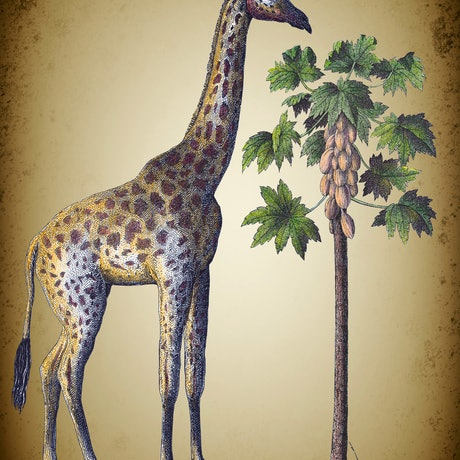 (CreativeWork) The Giraffe. Edition 1/10. by Sarah Mitchell. Mixed Media. Shop online at Bluethumb.