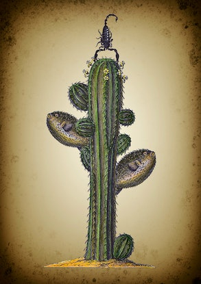 (CreativeWork) Fish Cactus. Edition 1/10. by Sarah Mitchell. Other Media. Shop online at Bluethumb.