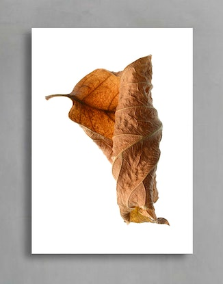(CreativeWork) Autumn Leaves Triptych Ed. 1 of 100 by Nadia Culph. Photograph. Shop online at Bluethumb.