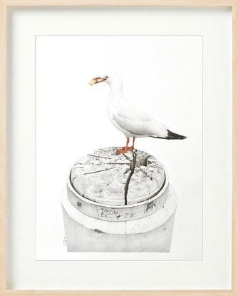 (CreativeWork) Chip bandit by Candace Slager. Drawings. Shop online at Bluethumb.