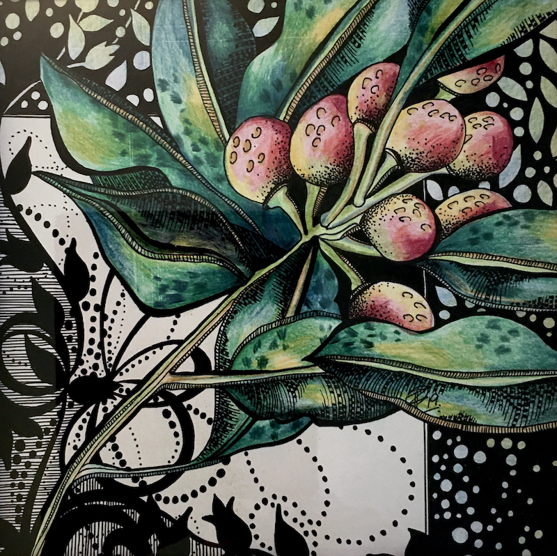 (CreativeWork) Native Berries in Pinks by Tania Daymond. Drawings. Shop online at Bluethumb.