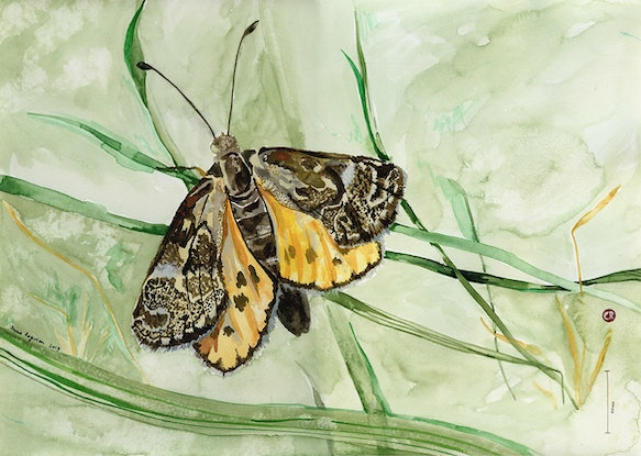 (CreativeWork) Golden Sun Moth - Are You Going To Stay by Alicia Rogerson. Watercolour Paint. Shop online at Bluethumb.