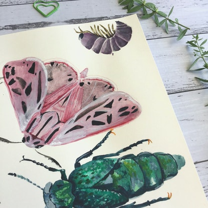 (CreativeWork) Moths, Beetles and Garden Friends by Alicia Rogerson. Watercolour Paint. Shop online at Bluethumb.