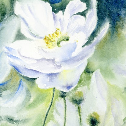 (CreativeWork) Anemones by Cecilia Xiao. Watercolour Paint. Shop online at Bluethumb.
