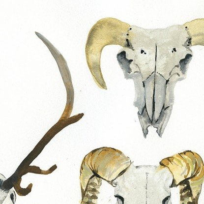 (CreativeWork) Skull Studies by Alicia Rogerson. Watercolour Paint. Shop online at Bluethumb.