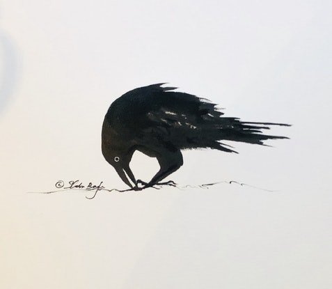 (CreativeWork) Raven - Framed ink on paper drawing  by Shabs Beigh. Drawings. Shop online at Bluethumb.