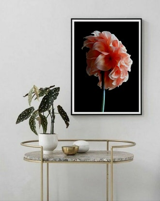 (CreativeWork) Orange Dahlia Ed. 1 of 100 by Nadia Culph. Photograph. Shop online at Bluethumb.