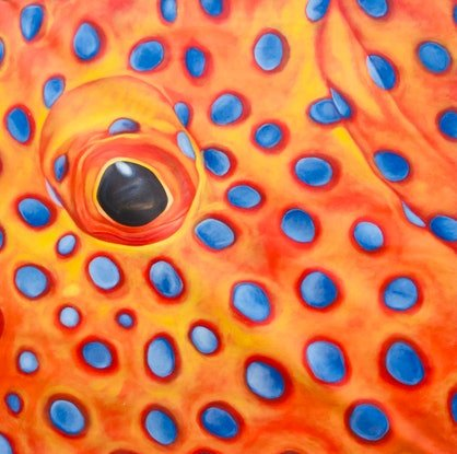 (CreativeWork) Coral trout by Mark Sinclair. Acrylic Paint. Shop online at Bluethumb.