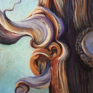 (CreativeWork) Bristle cone Pine - Ancient tree by Lindy Whitton. Drawings. Shop online at Bluethumb.