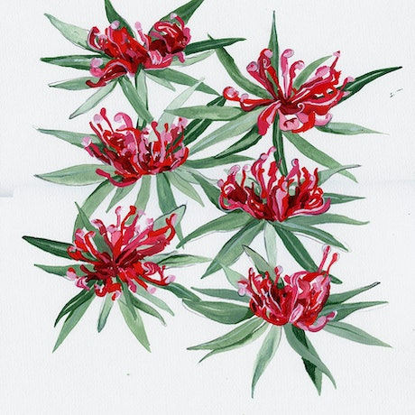 (CreativeWork) Braidwood Waratah by Alicia Rogerson. Acrylic Paint. Shop online at Bluethumb.