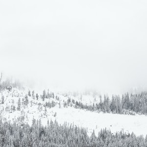 (CreativeWork) Winter Fog 3/3  Ed. 1 of 50 by Penny Prangnell. Photograph. Shop online at Bluethumb.