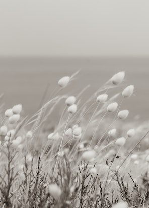 (CreativeWork) Fluffy days Ed. 1 of 2 by Wendy Philip. Photograph. Shop online at Bluethumb.