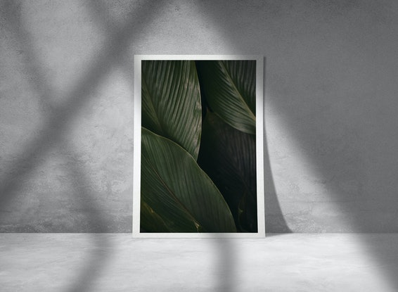 (CreativeWork) Plantas experiment III   Ed. 1 of 30 by Agus Gago. Photograph. Shop online at Bluethumb.