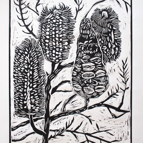 (CreativeWork) Banksia linocut  Ed. 6 of 20 by Matthew Broughton. Print. Shop online at Bluethumb.