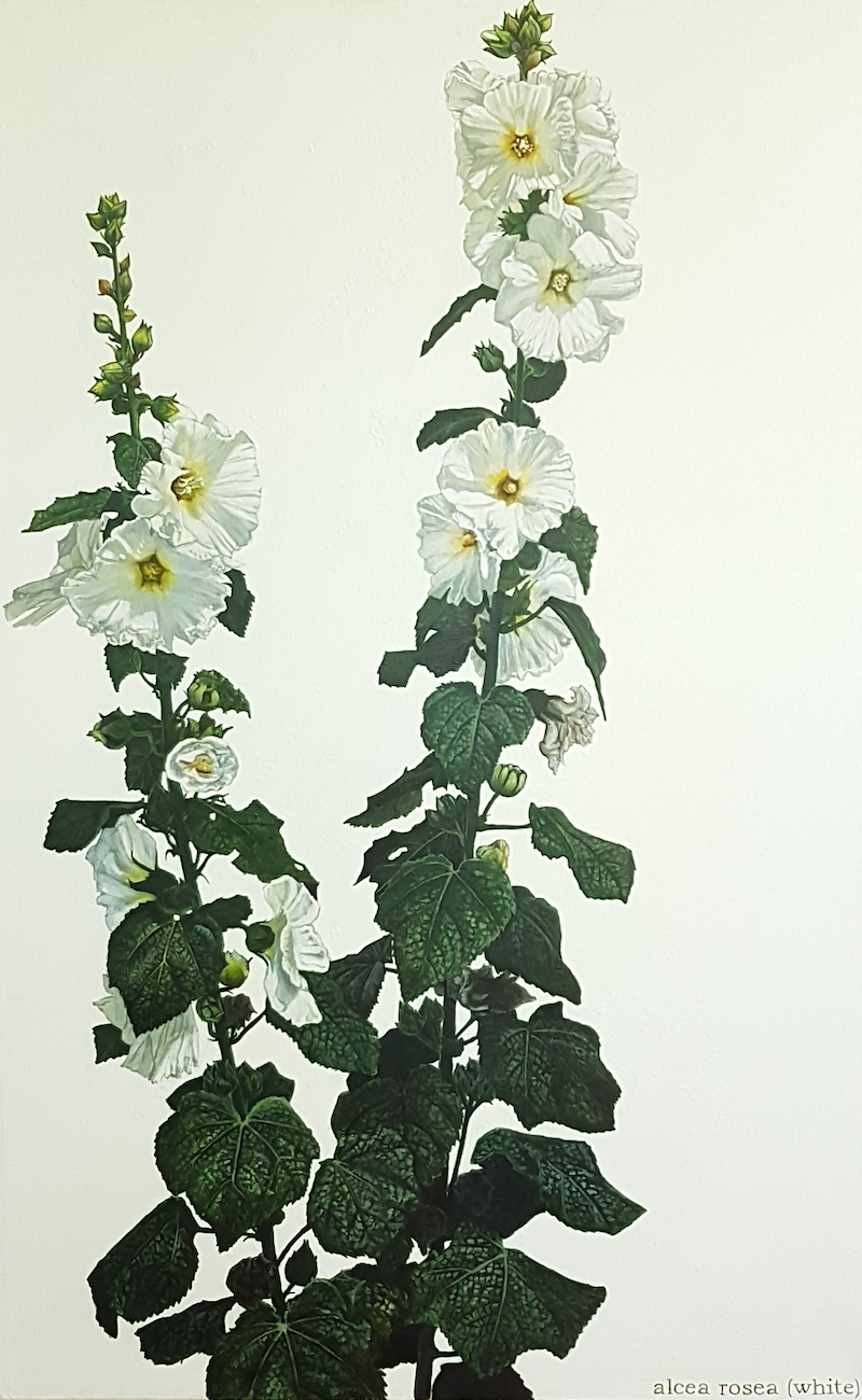 (CreativeWork) the hollyhocks by Claire Souter. Oil Paint. Shop online at Bluethumb.