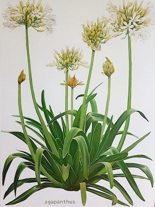 (CreativeWork) the  agapanthus by Claire Souter. Oil Paint. Shop online at Bluethumb.