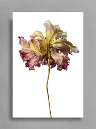 (CreativeWork) Beauty in Death (One) Ed. 2 of 100 by Nadia Culph. Photograph. Shop online at Bluethumb.