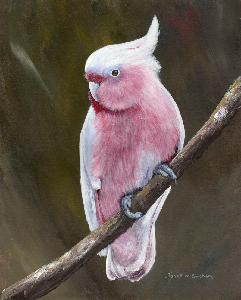 (CreativeWork) Major Mitchell's Cockatoo by Janet Graham. Acrylic Paint. Shop online at Bluethumb.