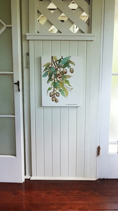 (CreativeWork) the gumnuts by Claire Souter. Oil Paint. Shop online at Bluethumb.