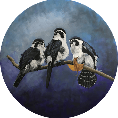 (CreativeWork) Pied Falconet by Priya Gore. Oil Paint. Shop online at Bluethumb.