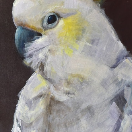 (CreativeWork) Cockatoo by Rebecca Hill. Acrylic Paint. Shop online at Bluethumb.