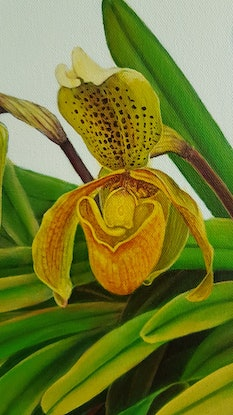 (CreativeWork) the orchid by Claire Souter. Oil Paint. Shop online at Bluethumb.